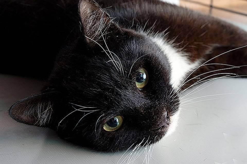 Сахарный диабет у кошек – не приговор!