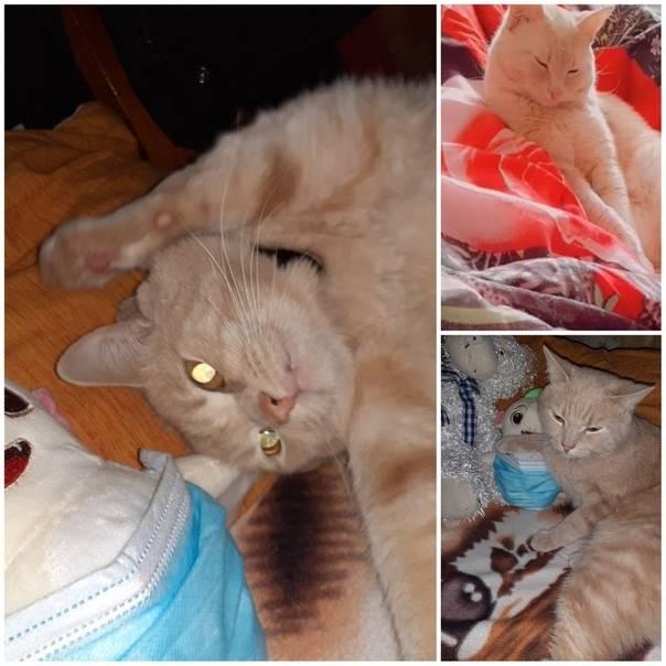Почему у кошки или котенка пропал голос, кот молчит или хрипит, когда мяукает: 10 причин и лечение животного