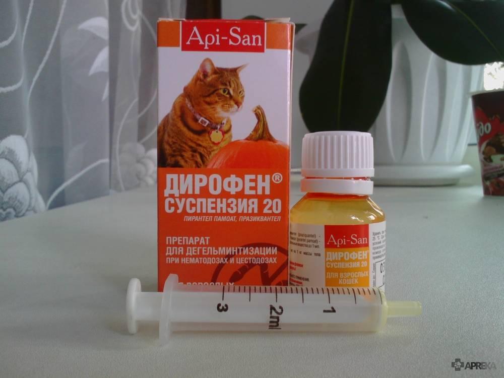 Какие слабительные средства можно давать кошке от запора: лечение дома