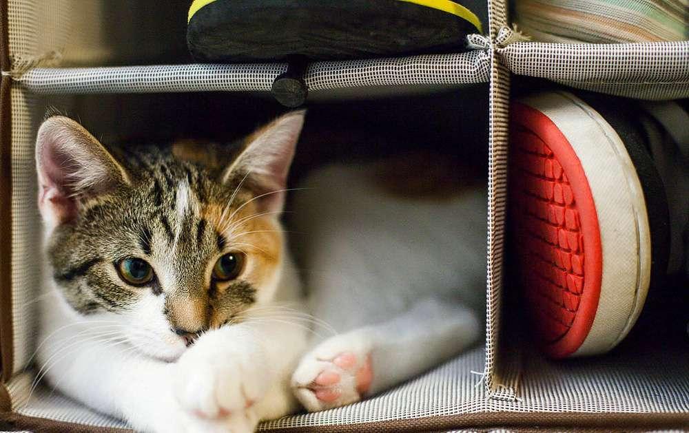 Запах кошачьей мочи на ковре: как избавиться разными способами