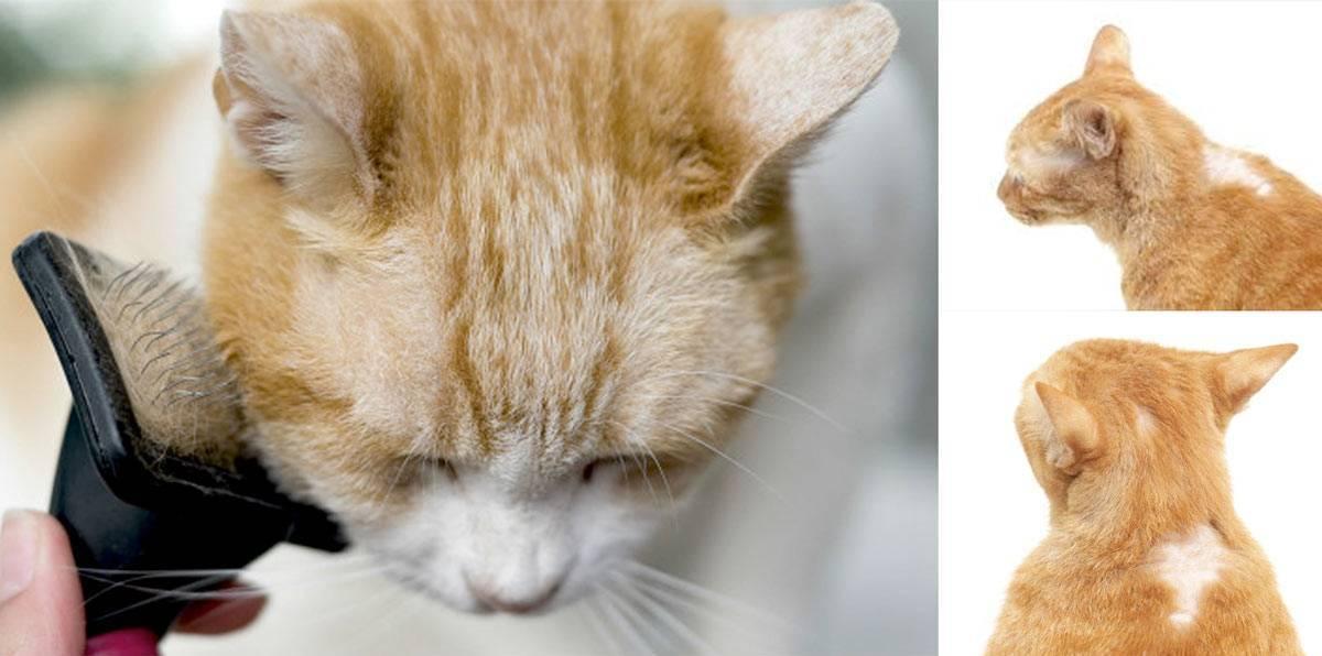Если у кошки выпадают усы – это нормально или плохо?