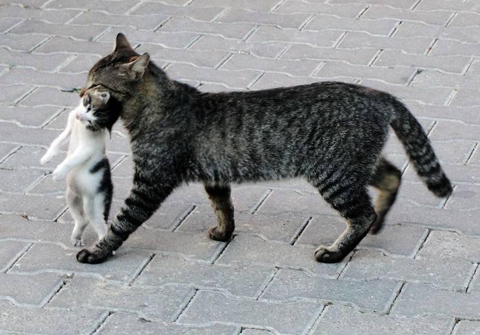 Почему кошка переносит котят в другое место - oozoo.ru