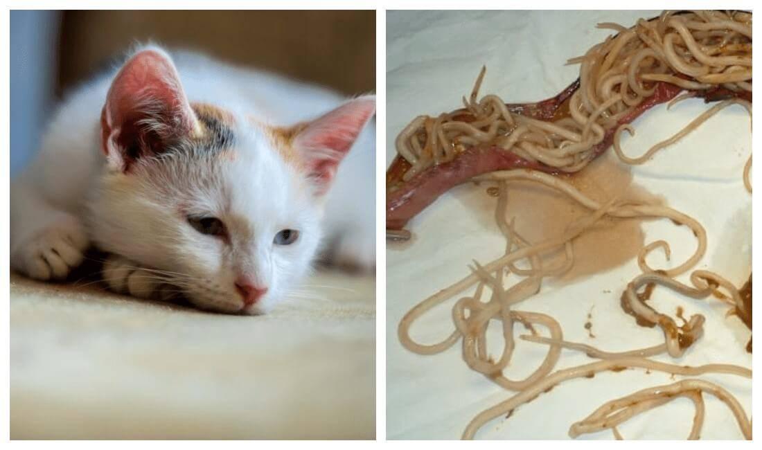 Какие кошки лечат болезни людей