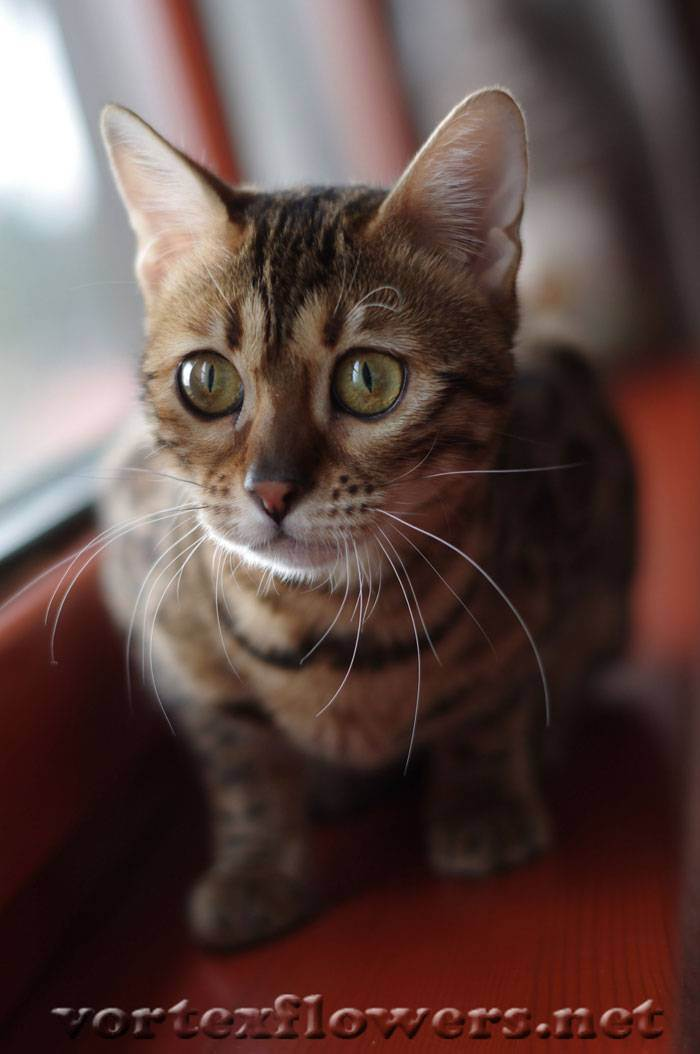 Как ухаживать за кошкой после стерилизации: видео (по дням)