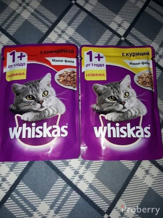 «вискас» для котят и взрослых кошек: можно ли кормить таким кормом любимца