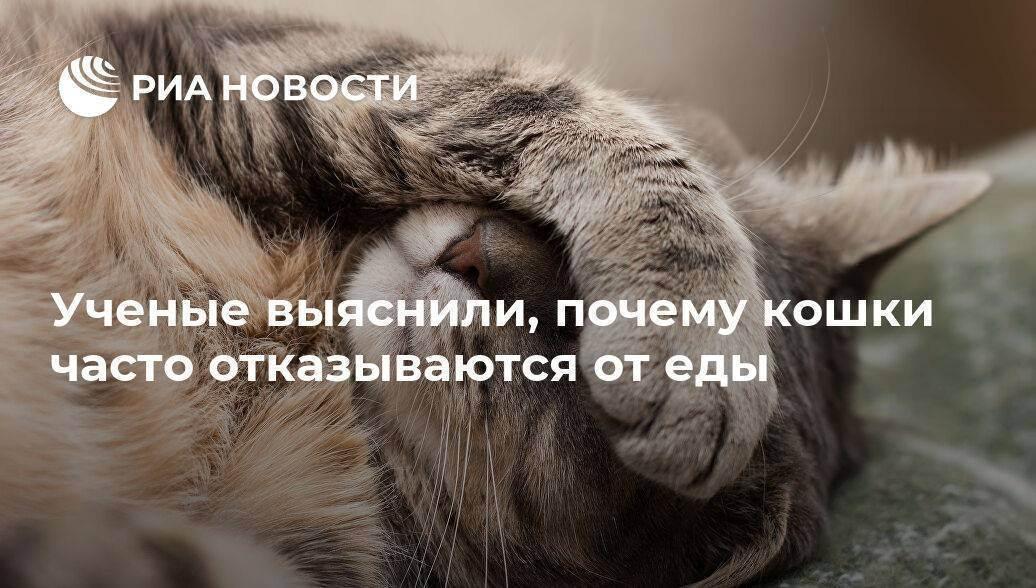Чем питаются кошки?