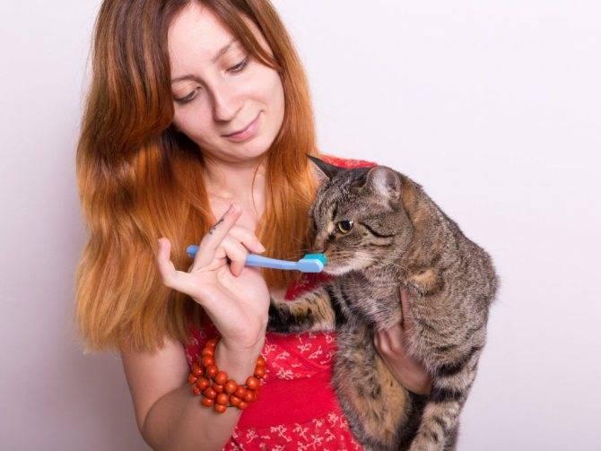 Чем в домашних условиях почистить зубы коту