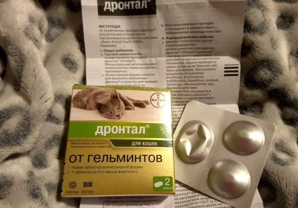 Прател для собак: инструкция по применению с дозировкой. как давать таблетки от глистов щенку?