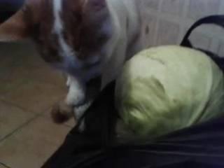 Почему я никогда больше не дам хомяку кочерыжку от капусты