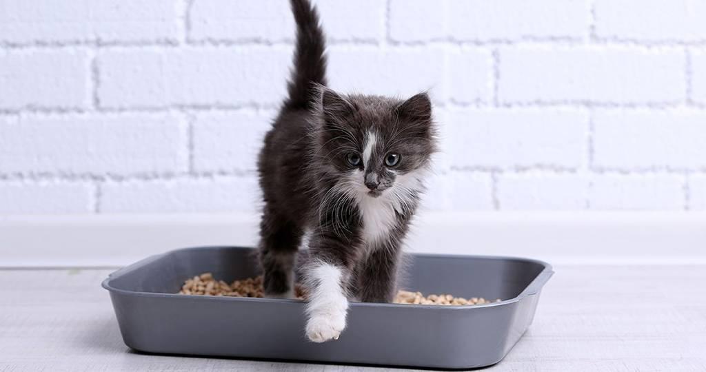 Вреден ли наполитель для кошачьего туалета для здоровья кошек?