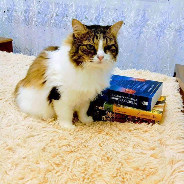 Чем отличается британская порода кошек от шотландской: характер и внешний вид