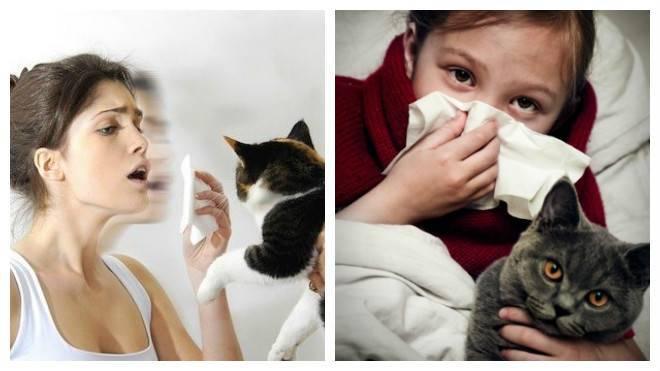 Аллергия у кошки. 21 симптом указывающий на аллергию