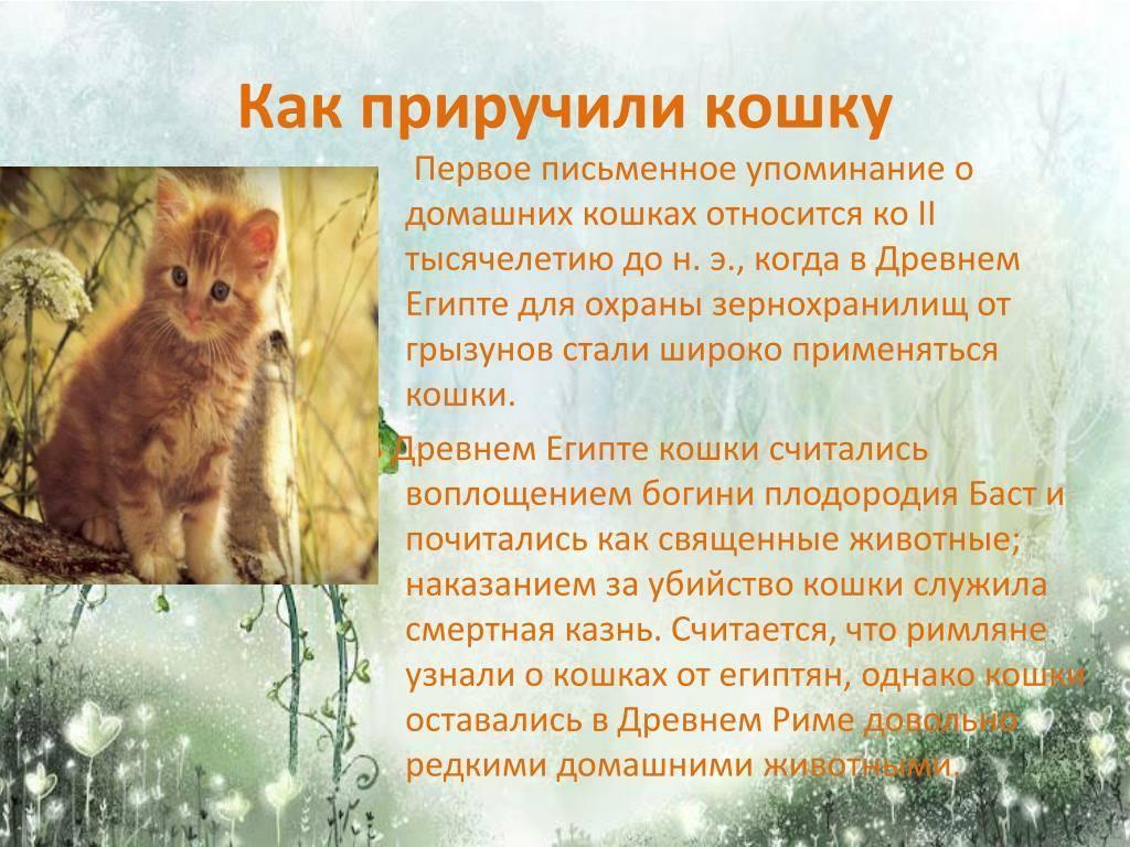 Как человек приручил кошку?