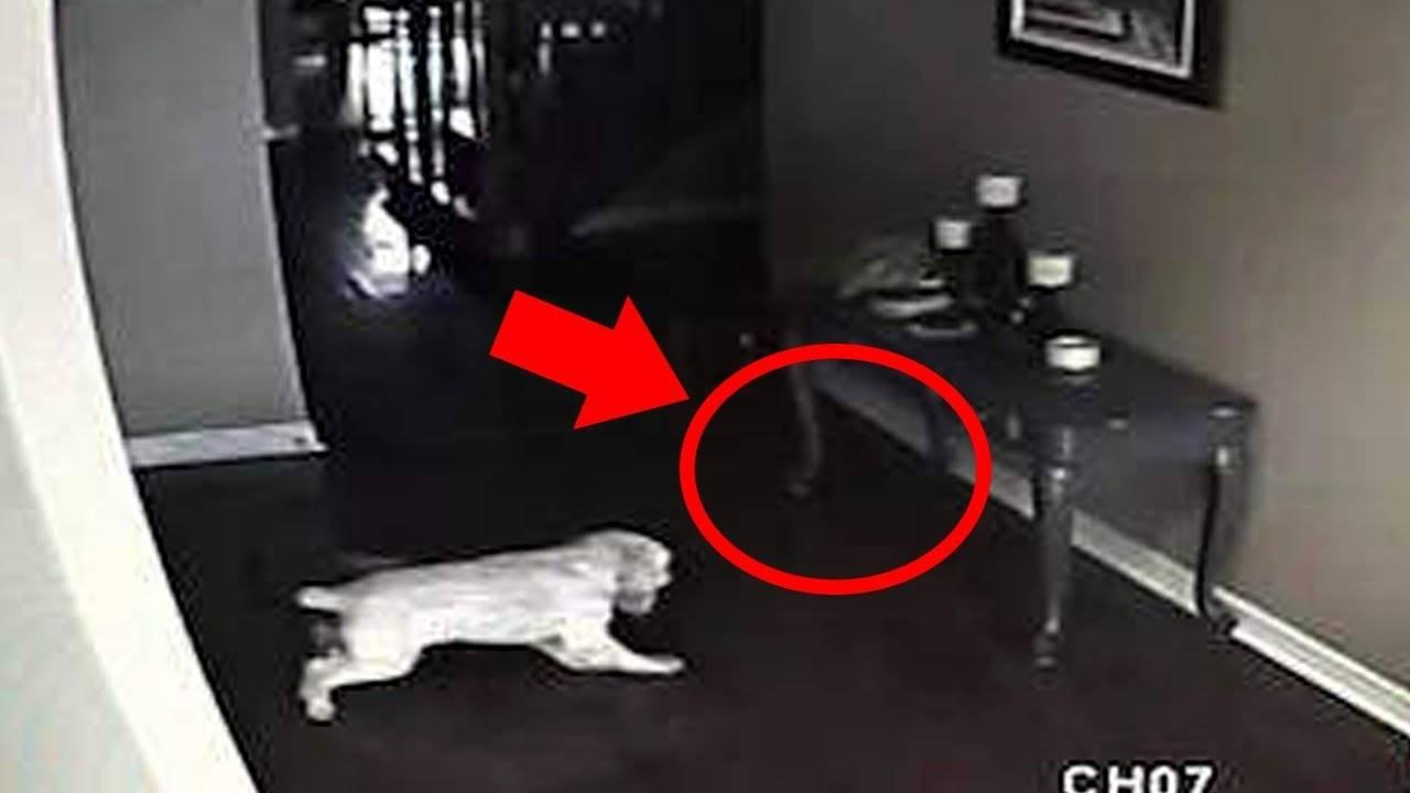 Кошки видят призраков правда ли это