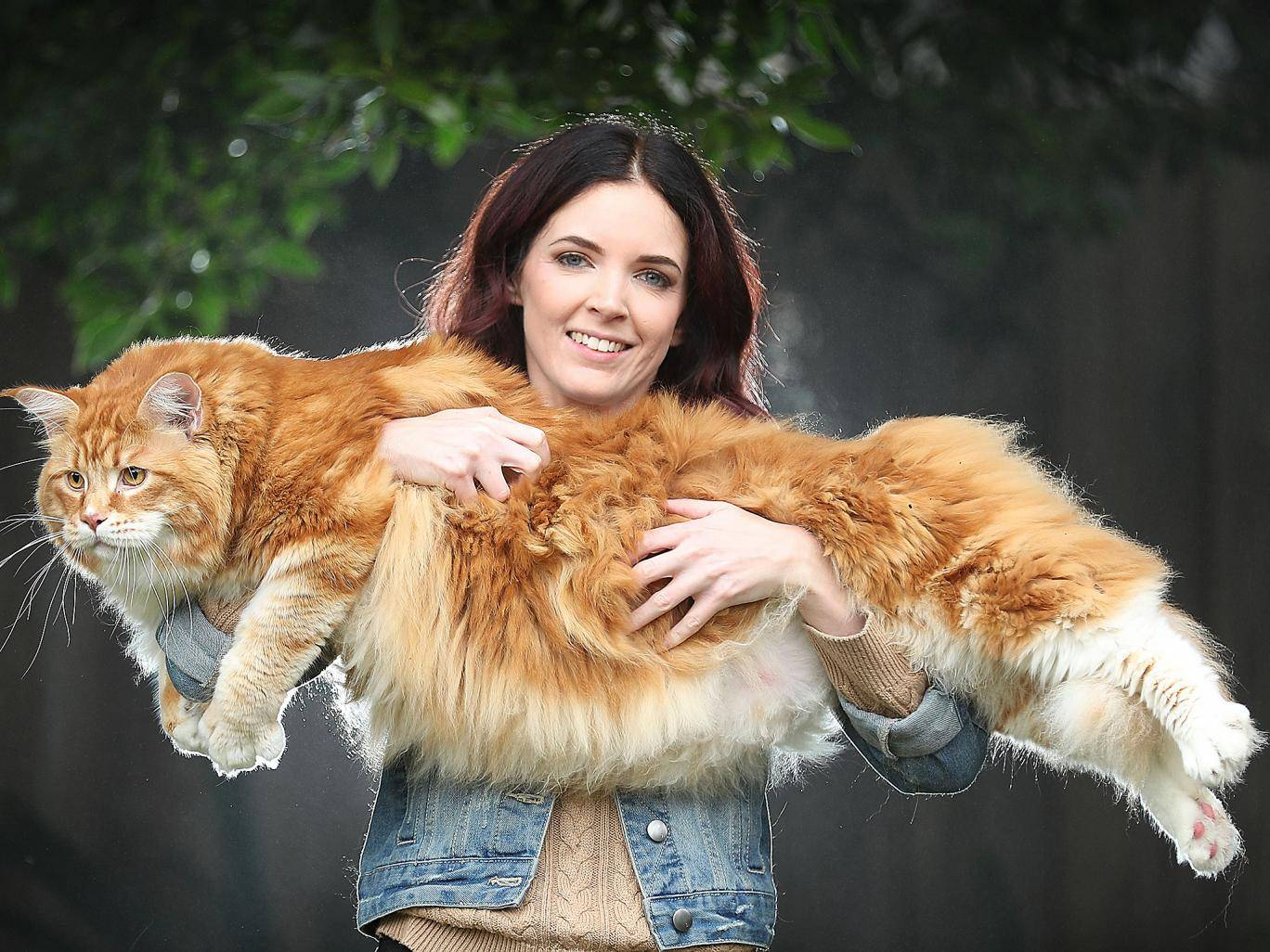 Самые толстые коты и кошки в мире: рейтинг рекордсменов и последствия ожирения