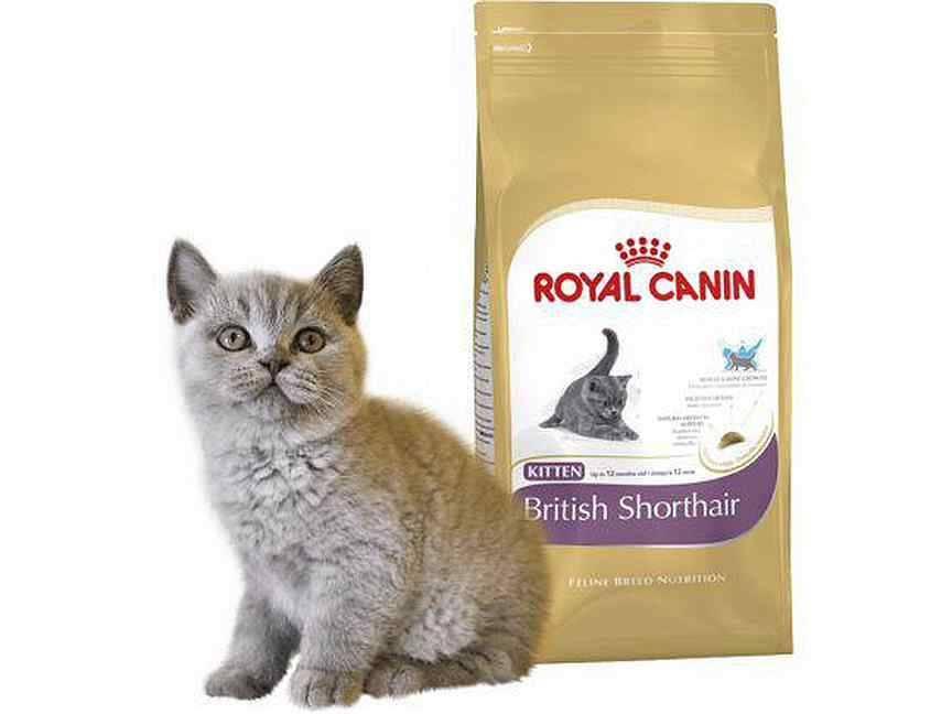 Чем кормить котёнка британца: в 1, 2, 3, 4 или 6 месяцев, меню из натуральных продуктов или готовых кормов, витамины и добавки