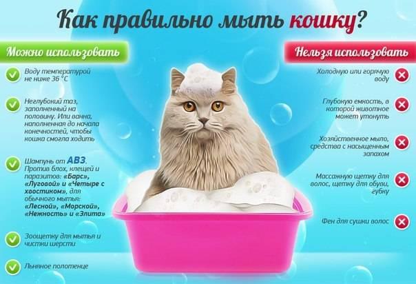 Как помыть кота без проблем: 80 фото и видео описание ухода за котами
