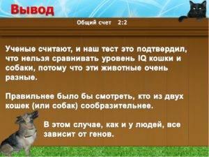 "Самое умное домашнее животное: собака или кошка | блог ветклиники ""беланта"""