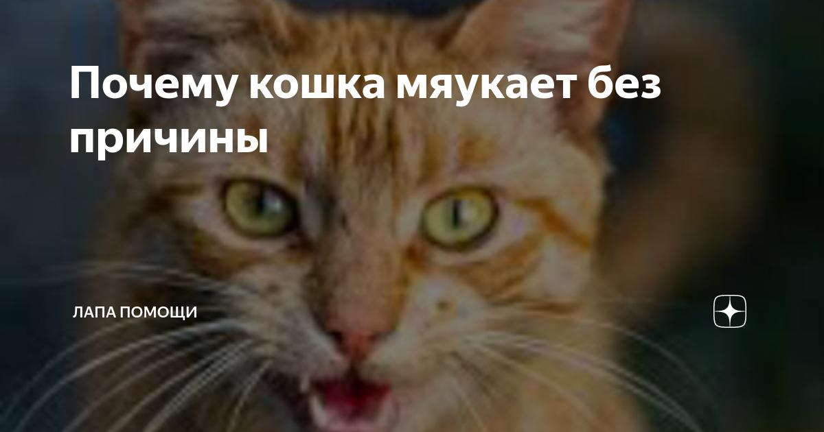 Что делать, если кошка мяукает и орет
