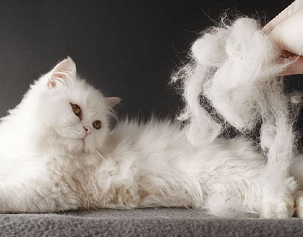 Кошка сильно линяет — что делать?