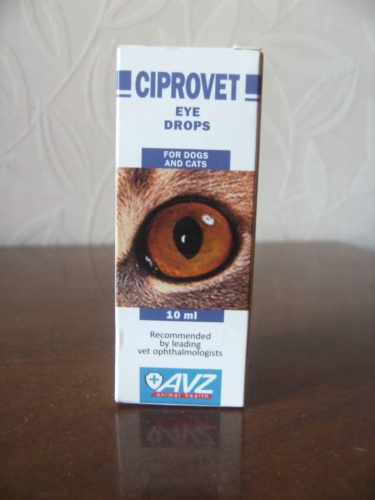 Ципровет: скорая помощь для кошачьих глаз