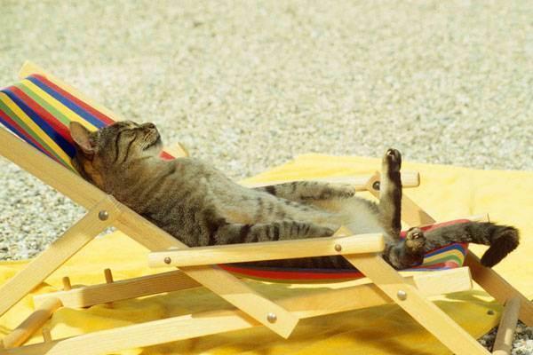 Как спасти кошку от жары.