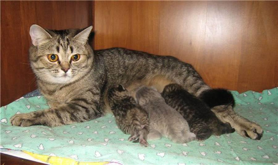 Стоит ли переживать, если кошка не ест после родов?