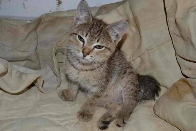 Как определить рахит у котят: симптомы, развитие болезни, лечение