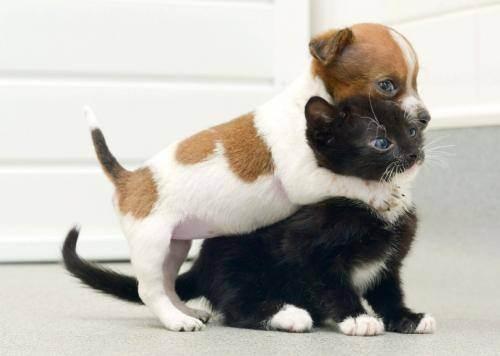 Почему кошке нельзя дружить с собакой