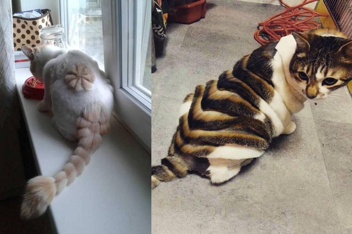 Действительно ли кошки снимают стресс: новое исследование ученых - досуг