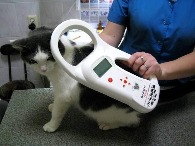 Что такое чипирование кошек