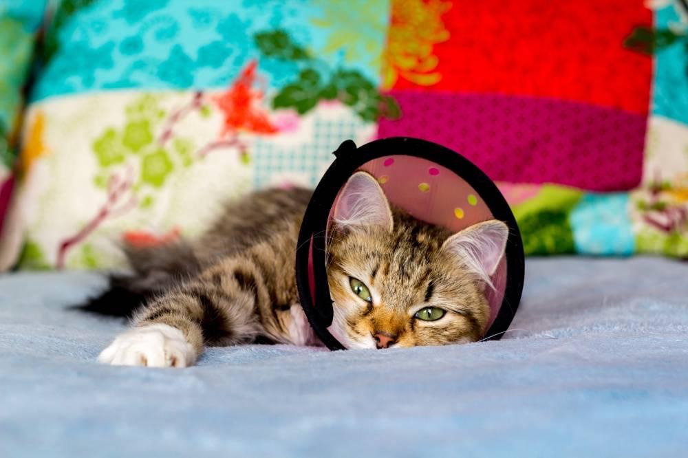 Как лечить кошку при инфаркте