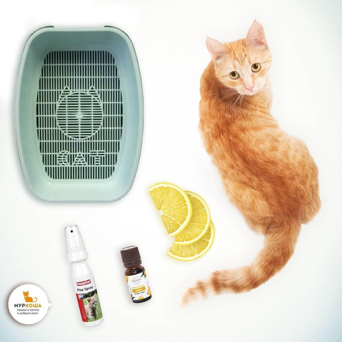 Способы, как отучить кошку гадить в неположенном месте