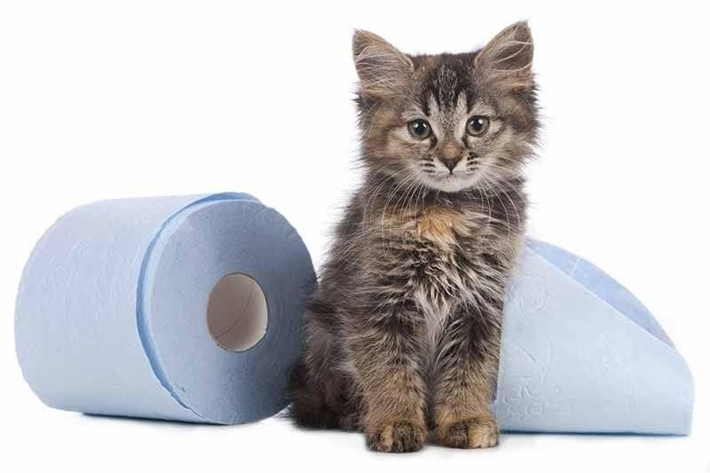 Понос и рвота у кота лечение