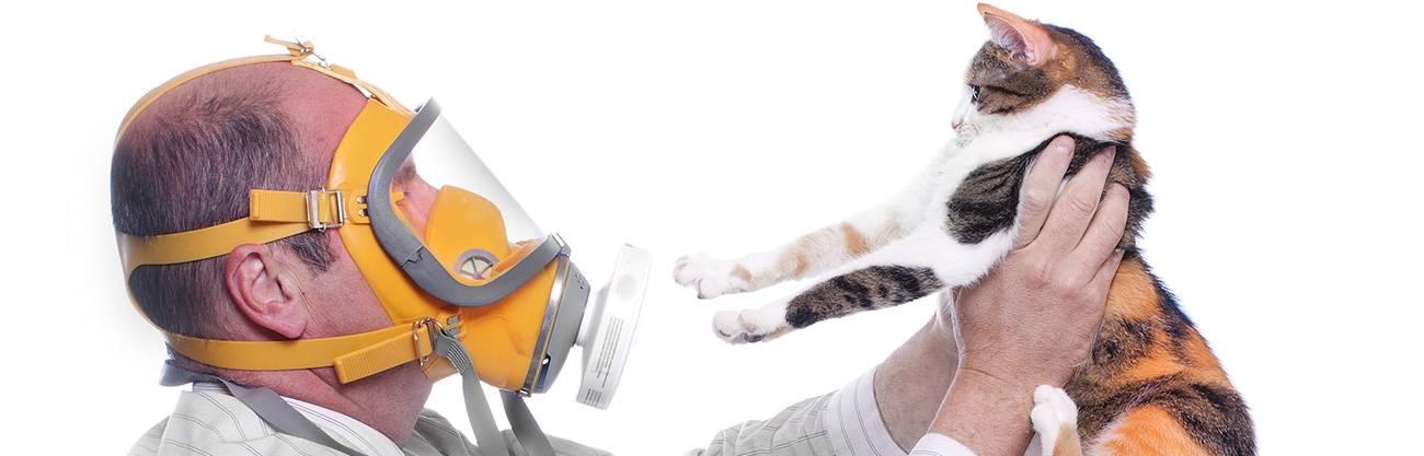 Аллергия на кошку у взрослых: причины, симптомы, признаки