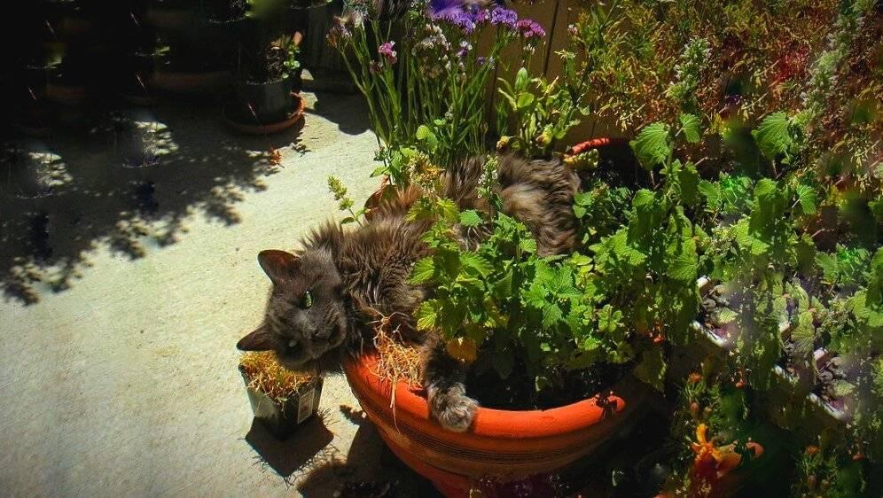 Как отучить гадить кошек в подъезде