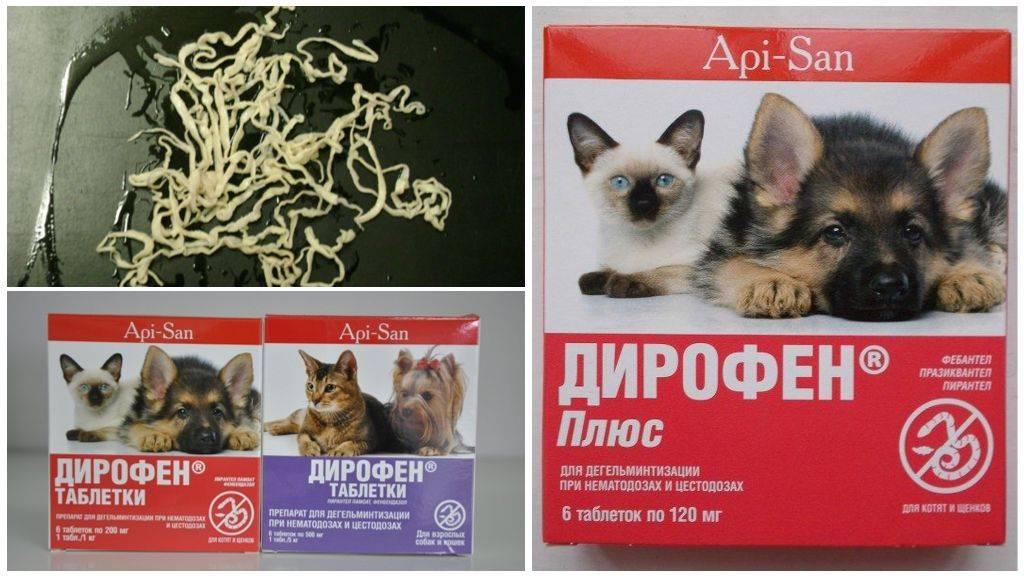 Дирофен для кошек — инструкция по применению