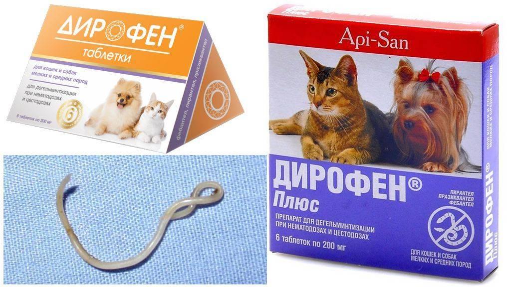 Прател для кошек: инструкция по применению, аналоги, отзывы