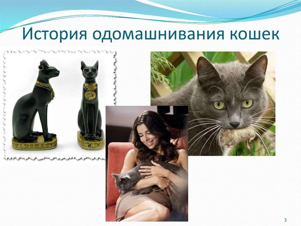 Как подружиться с кошкой