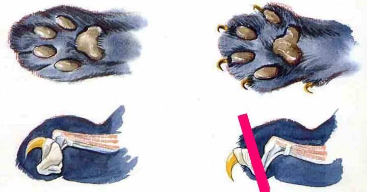 Строение кошки