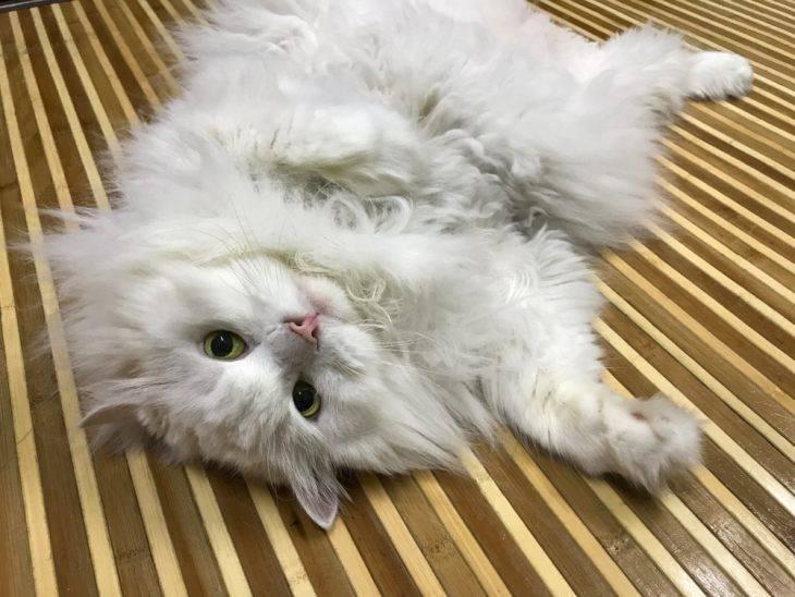 Почему у кошки жирная шерсть: причины, что делать