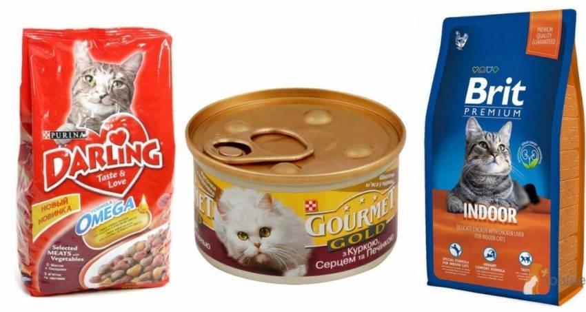 Анемия у кошек: виды, причины, симптомы и лечение
