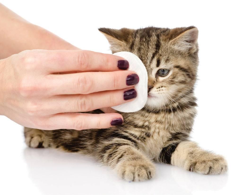 Чем можно лечить глаза у кошки