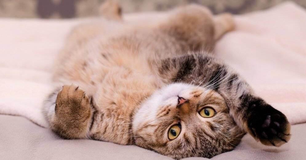 Если кошка перестала ходить в лоток руководство к действию