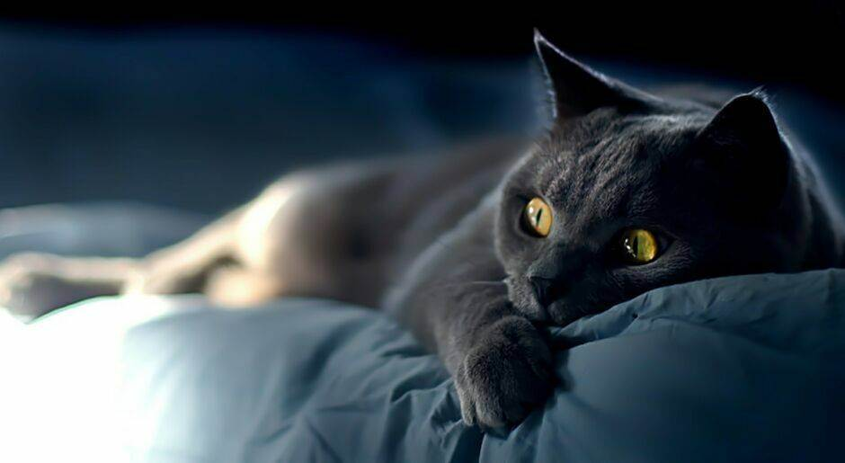 Кошка дрожит – причины, профилактика, лечение