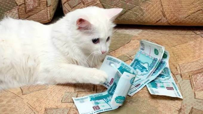 Породистая кошка без документов: что делать, и куда бежать