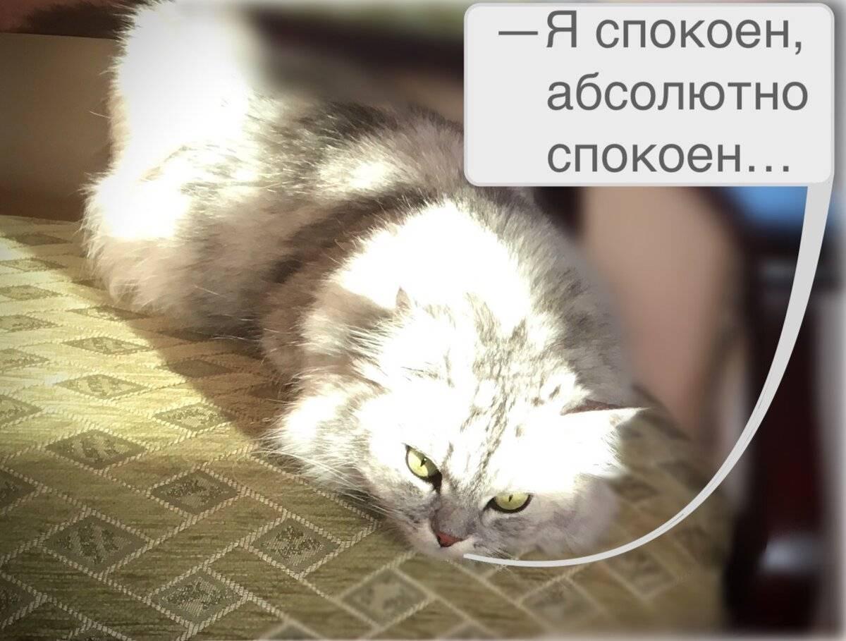 Кот метит в доме