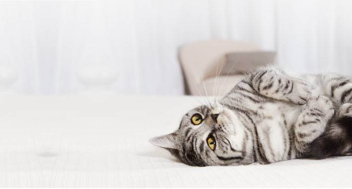 Можно ли держать кошку в доме во время беременности?