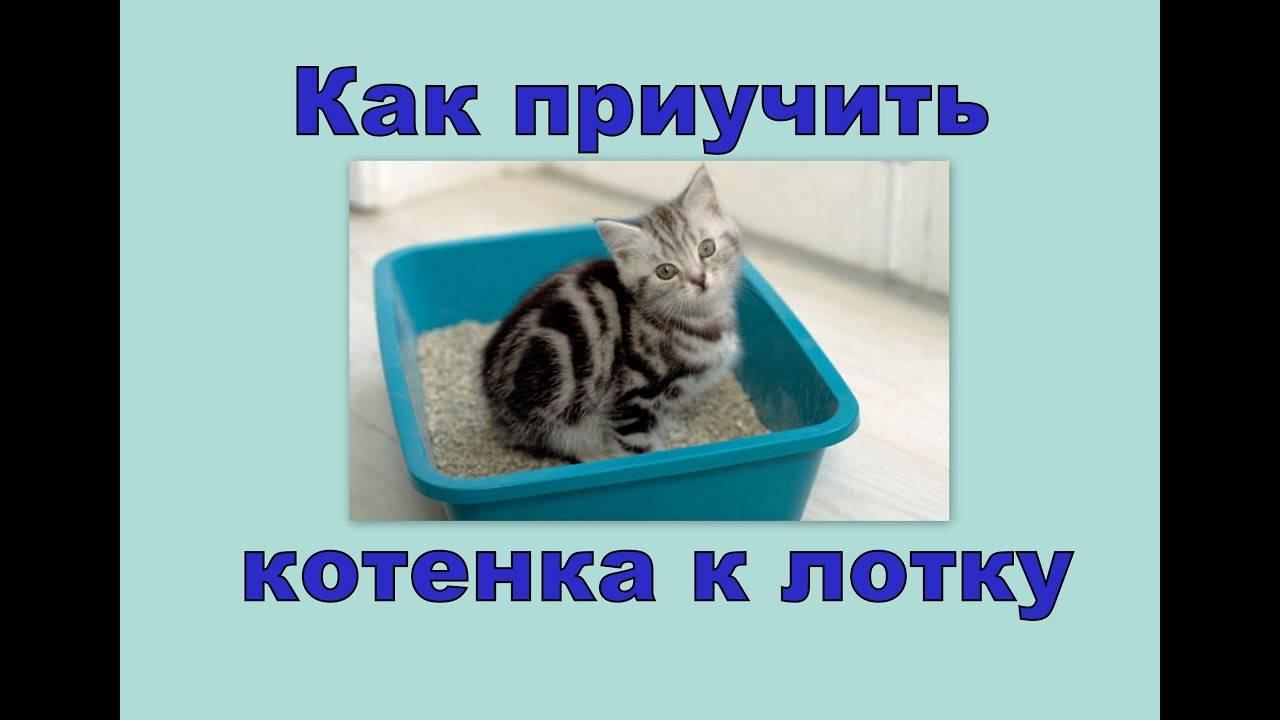 Как приучить котенка к рукам: быстрые и простые советы