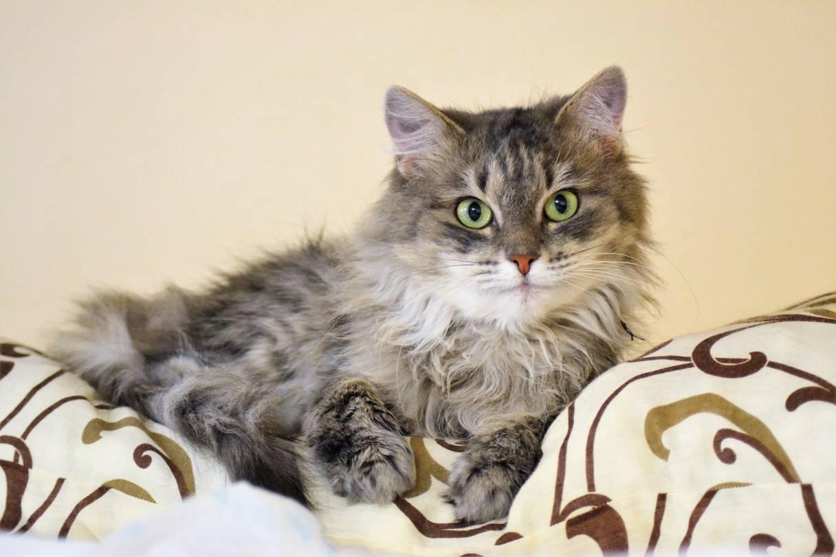 К чему снятся маленькие котята и кошки - толкование по соннику